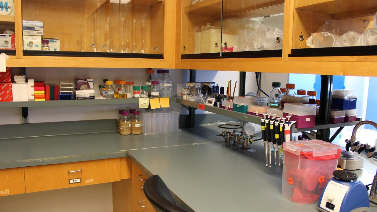Photo of Melotto Lab.